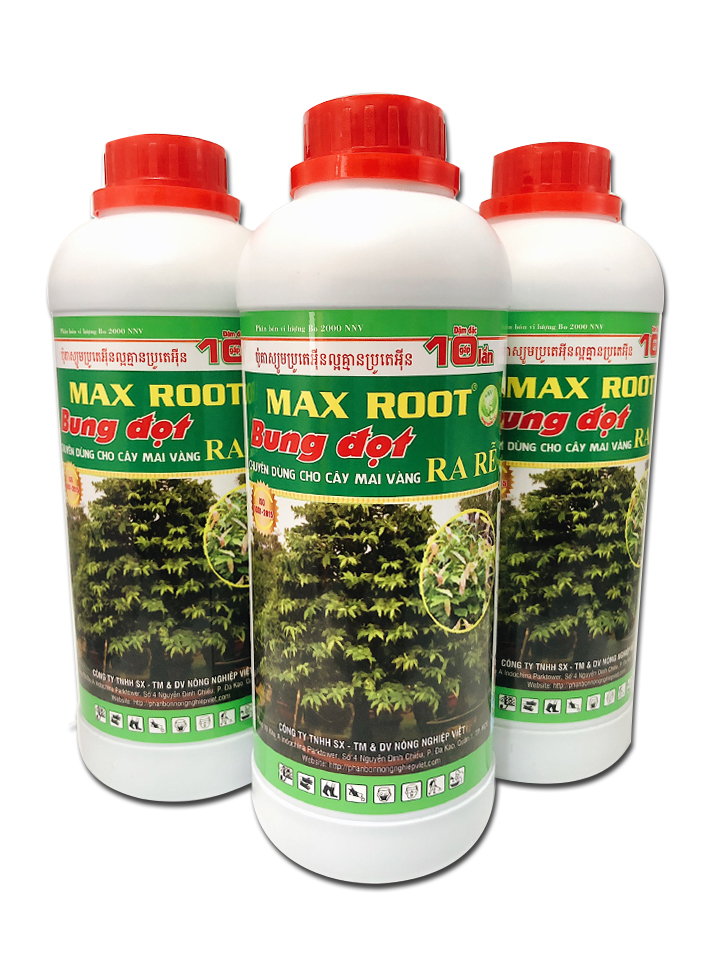 max-root-3